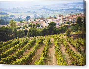 Winemaking In The Largest Wine Region Canvas Print