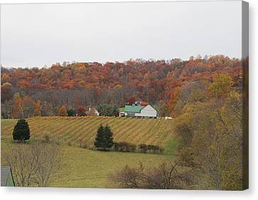 Winery In Virginia At Fall Canvas Print by Renee Braun