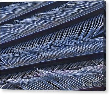 Wing Feather Detail Of A Swallow (sem) Canvas Print by Power And Syred