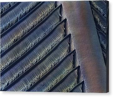 Wing Feather Detail Of Swallow Sem Canvas Print by Science Photo Library