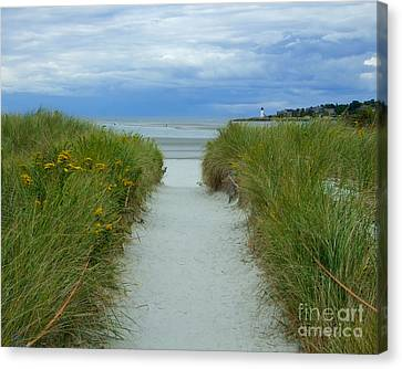 Wingaersheek Beach Path And Annisquam Lighthouse Canvas Print by Kristen Fox