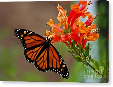 Winged Grace Canvas Print