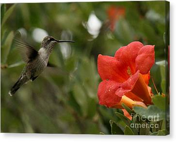Winged Sipper Canvas Print