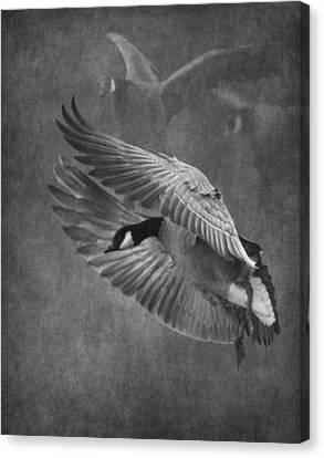 Winged Symphony Canvas Print