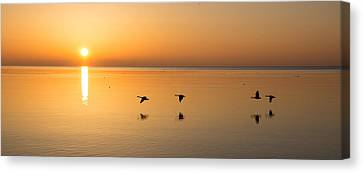 Canvas Print featuring the photograph Wings At Sunrise by Georgia Mizuleva