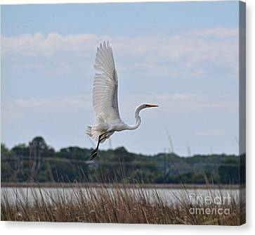 Canvas Print featuring the photograph Wings by Carol  Bradley