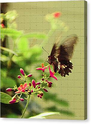 Wings In Motion Canvas Print by Aimee L Maher Photography and Art Visit ALMGallerydotcom