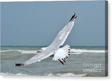 Canvas Print featuring the photograph Wings Of Freedom by Simona Ghidini