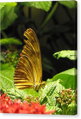 Wings Of Gold Canvas Print by Jennifer Wheatley Wolf