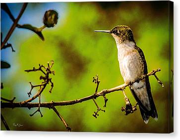 Hummingbird - Perched - Wings Of Summer Canvas Print