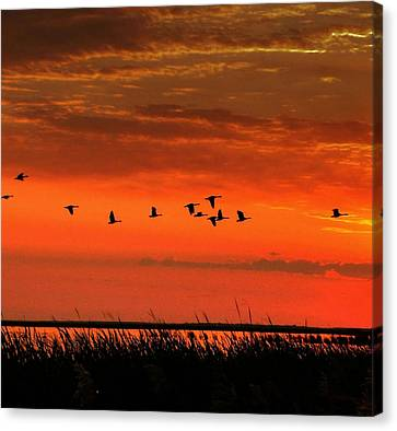 Wings On High Canvas Print by Larry Trupp