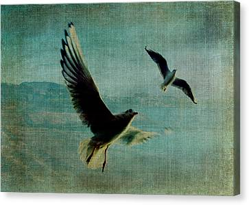 Wings Over The World Canvas Print by Sarah Vernon