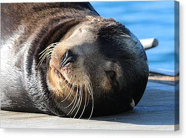Canvas Print featuring the photograph Wink Wink by Christy Pooschke