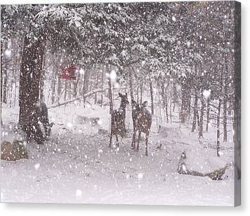 Winter 2014 Canvas Print