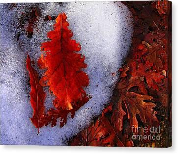 Winter 3  Canvas Print by Vassilis Tagoudis