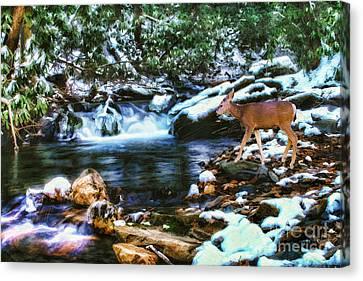 Winter Along Rock Castle  Canvas Print by Darren Fisher