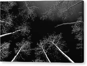 Canvas Print featuring the photograph Winter Aspen  by Eric Rundle