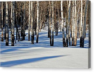 Canvas Print featuring the photograph Winter Aspens by Jack Bell