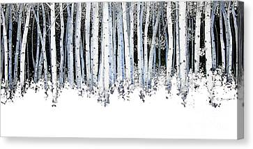 Winter Aspens  Canvas Print by Michael Swanson