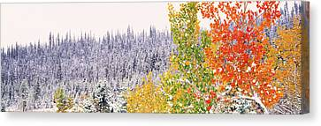 Thaw Canvas Print - Winter, Aspens, Usa by Panoramic Images