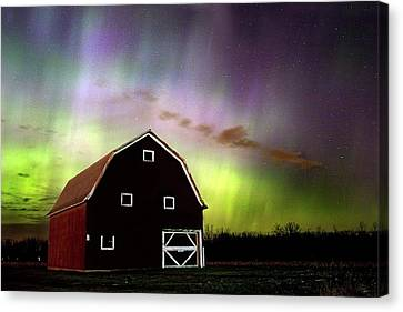 Winter Aurora Canvas Print by Timothy McIntyre