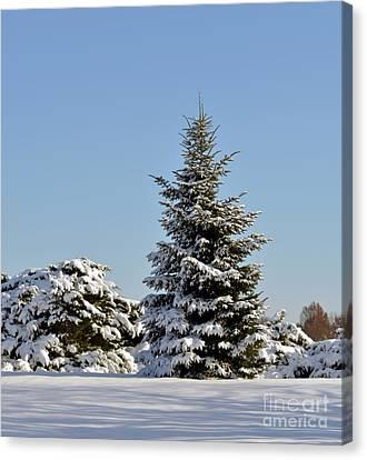 Winter Beauty 0213 Canvas Print
