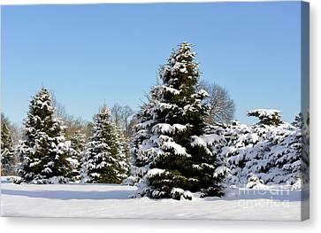Winter Beauty 0239 Canvas Print