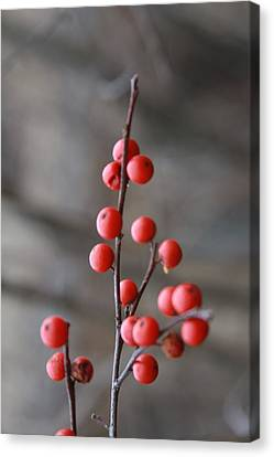 Canvas Print featuring the photograph Winter Berries by Vadim Levin