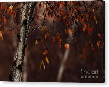 Winter Birch Canvas Print by Linda Shafer