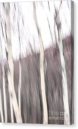 Winter Birches Tryptich 1 Canvas Print by Susan Cole Kelly Impressions