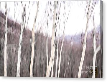 Winter Birches Tryptich 2 Canvas Print by Susan Cole Kelly Impressions