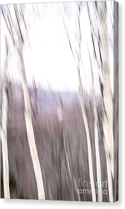 Winter Birches Tryptich 3 Canvas Print by Susan Cole Kelly Impressions