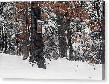 Canvas Print featuring the photograph Winter Bird House by Wayne Meyer