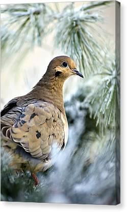 Nature Scene Canvas Print - Winter Bird Mourning Dove by Christina Rollo