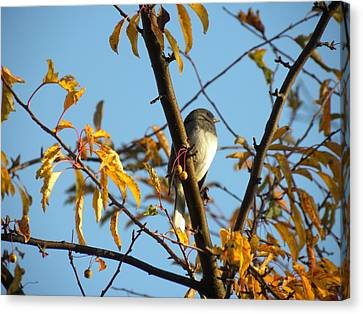 Canvas Print featuring the photograph Winter Bird by Teresa Schomig