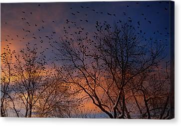 Winter Birds Canvas Print by Utah Images
