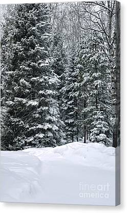 Winter Bliss Canvas Print by Gwen Gibson