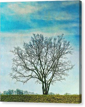 Canvas Print featuring the photograph Winter Blues by Gary Slawsky