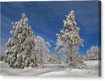 Winter Blues Canvas Print by Lois Bryan