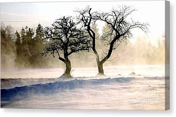 Winter Bluster Canvas Print by Christopher Mace