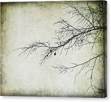 Winter Branch Canvas Print by Suzanne Barber