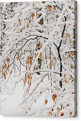 Winter Branches Canvas Print by Ann Horn