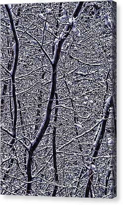Winter Branches Canvas Print by Garry Gay