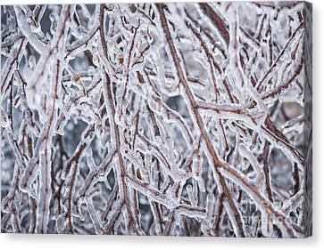 Winter Branches In Ice Canvas Print by Elena Elisseeva