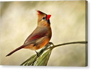Winter Cardinal Canvas Print by Christina Rollo