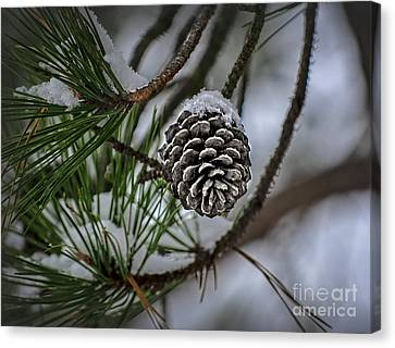 Winter Coat Canvas Print by Brenda Bostic