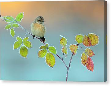 Winter Colors Canvas Print by Andres Miguel Dominguez