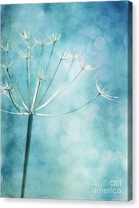 Winter Colors Canvas Print by Priska Wettstein