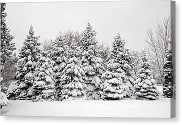 Winter Copse Canvas Print