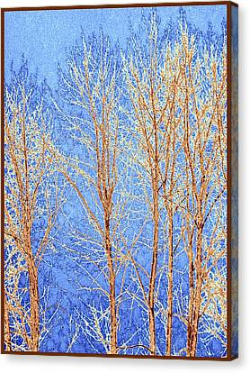Winter Cottonwoods Abstract Canvas Print by Will Borden